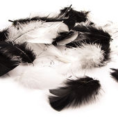 Harlequin Mix Craft Feathers 5g